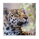 Fotografía del leopardo teja  ceramica
