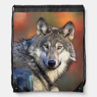 Fotografía del lobo mochilas