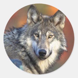 Fotografía del lobo pegatina redonda