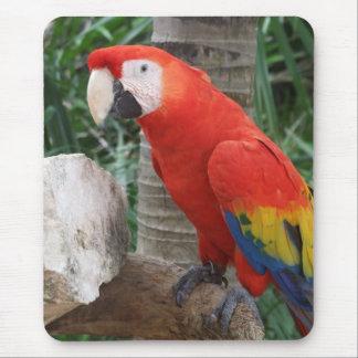 Fotografía del Macaw del escarlata Alfombrilla De Raton