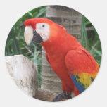 Fotografía del Macaw del escarlata Pegatinas Redondas