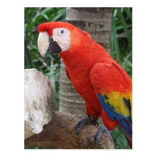 Fotografía del Macaw del escarlata Postales