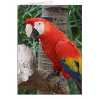 Fotografía del Macaw del escarlata Tarjeta De Felicitación