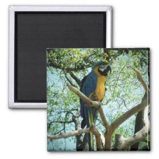 Fotografía del Macaw Imán Cuadrado