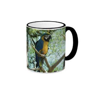Fotografía del Macaw Taza A Dos Colores