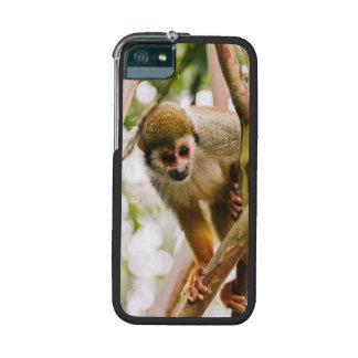 Fotografía del mono de ardilla