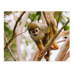 Fotografía del mono de ardilla tarjetas postales