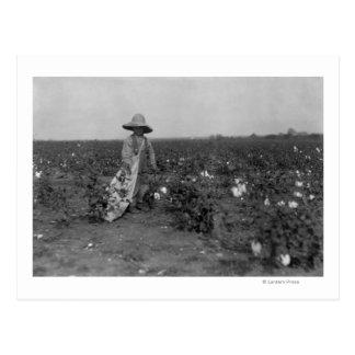 Fotografía del oeste, Tejas del algodón de la Tarjeta Postal