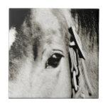 Fotografía del ojo del caballo teja cerámica