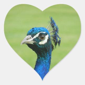 Fotografía del pavo real pegatina de corazón personalizadas