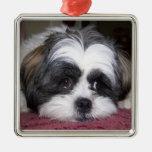 Fotografía del perro de Shih Tzu Ornamentos De Reyes Magos
