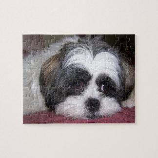 Fotografía del perro de Shih Tzu Puzzle Con Fotos