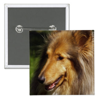 Fotografía del perro del collie pin cuadrado