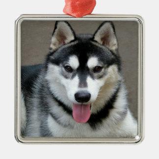Fotografía del perro del Malamute de Alaska Adorno Navideño Cuadrado De Metal