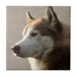 Fotografía del perro del Malamute de Alaska Tejas Cerámicas