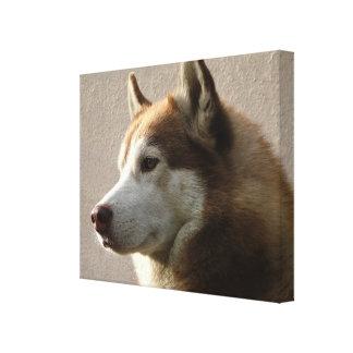 Fotografía del perro del Malamute de Alaska Impresion En Lona