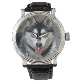 Fotografía del perro del Malamute de Alaska Relojes De Pulsera
