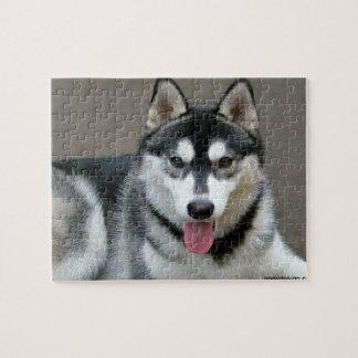 Fotografía del perro del Malamute de Alaska Rompecabeza