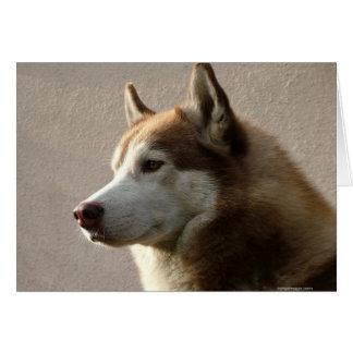 Fotografía del perro del Malamute de Alaska Tarjetón