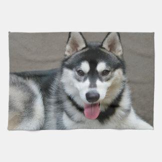 Fotografía del perro del Malamute de Alaska Toallas De Mano