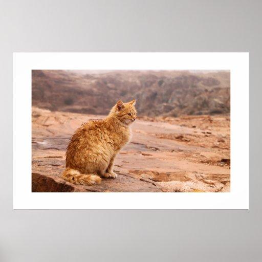Fotografía del poster del gato del jengibre