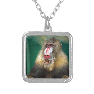 Fotografía del primate colgante cuadrado
