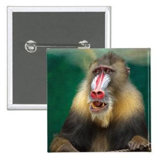 Fotografía del primate pin cuadrado