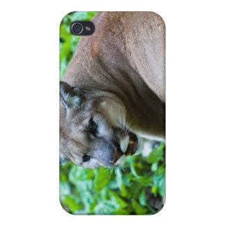 Fotografía del puma iPhone 4 funda