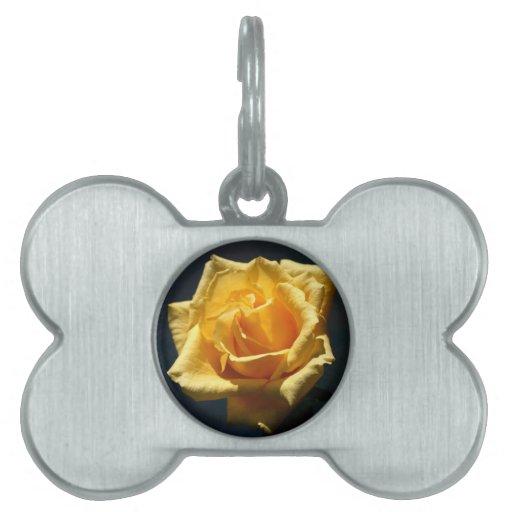 Fotografía del rosa amarillo contra fondo oscuro placas de nombre de mascota