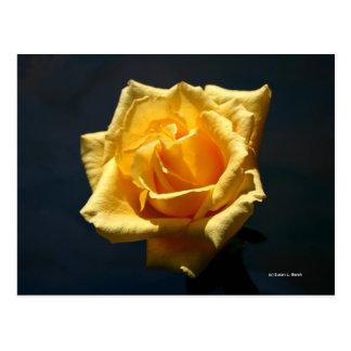 Fotografía del rosa amarillo contra fondo oscuro postal