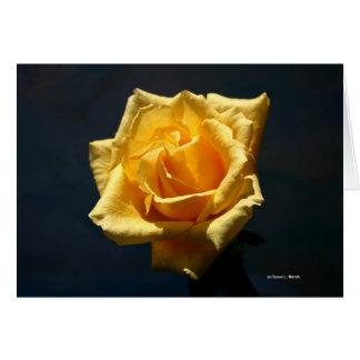 Fotografía del rosa amarillo contra fondo oscuro tarjetón