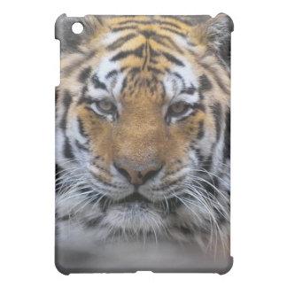 Fotografía del tigre siberiano