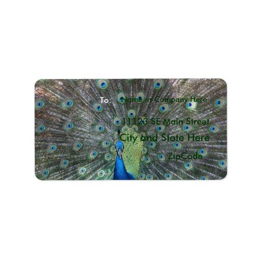 Fotografía del varón del pavo real por completo… etiquetas de dirección