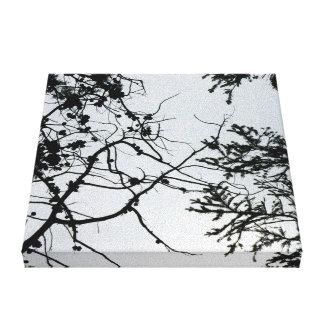 Fotografía del zen de los conos del pino en lona impresión en lona estirada