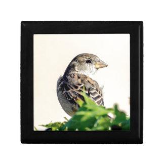 Fotografía deliciosa del pájaro caja de regalo