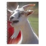Fotografía divertida de la cabra de Tallking Libro De Apuntes Con Espiral