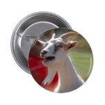 Fotografía divertida de la cabra de Tallking Pin Redondo De 2 Pulgadas