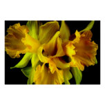 Fotografía dramática rizada del arte de las flores impresiones