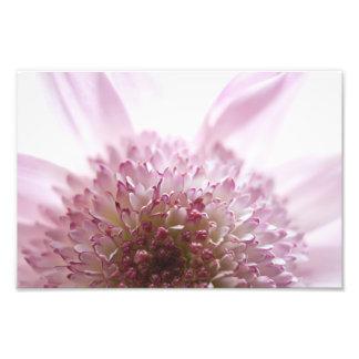 Fotografía en colores pastel suave de la flor fotografias