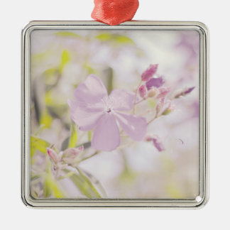Fotografía en colores pastel suave de la flor ornato