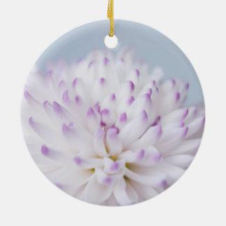 Fotografía en colores pastel suave de la flor adorno de reyes
