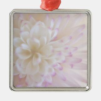 Fotografía en colores pastel suave de la flor ornamente de reyes