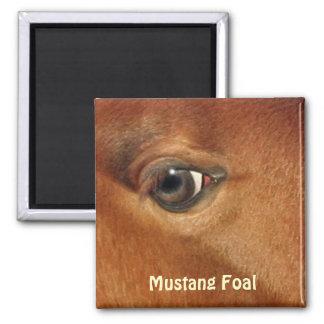 Fotografía equina del ojo del caballo del mustango imán cuadrado