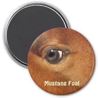 Fotografía equina del ojo del caballo del mustango imán redondo 7 cm