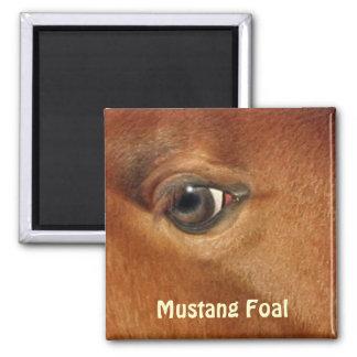 Fotografía equina del ojo del caballo español del imán cuadrado