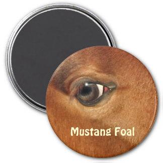 Fotografía equina del ojo del caballo español del imán redondo 7 cm