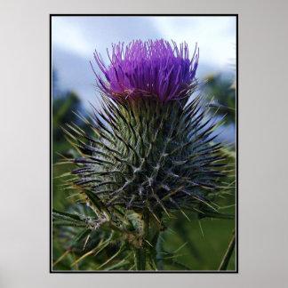 Fotografía escocesa de la bella arte del cardo