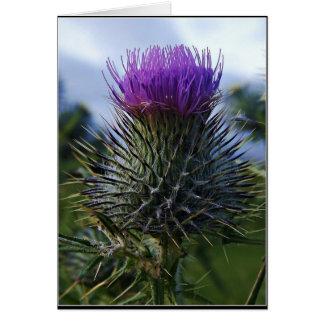 Fotografía escocesa de la bella arte del cardo tarjeta de felicitación