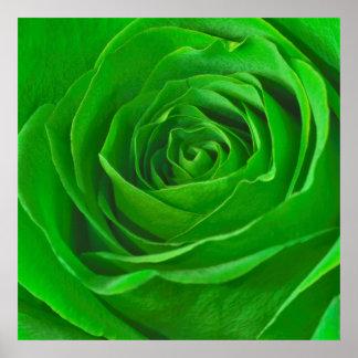 Fotografía esmeralda abstracta del centro del rosa poster