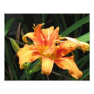 Fotografía floral de la floración anaranjada de la fotografía